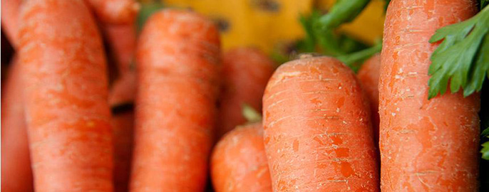 Genome sequencing reveals how carrots have become good at accumulating carotenoids, the pigment compounds that give them their characteristic colors and nutritional richness.