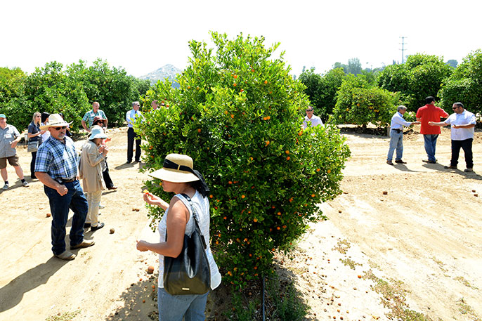 UC Riverside citrus safety