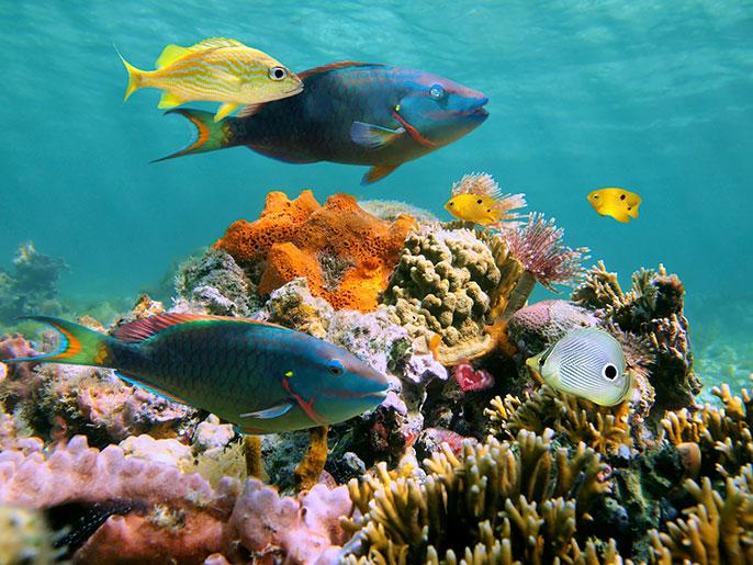 variety of ocean fish