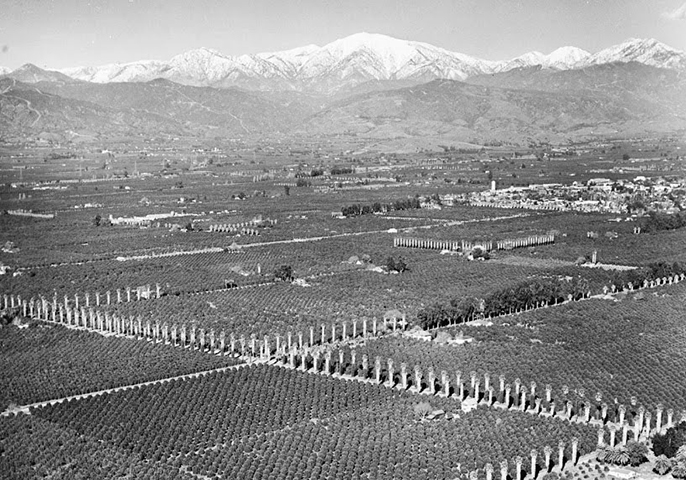 An aerial view of orange groves near Covina during World War II.