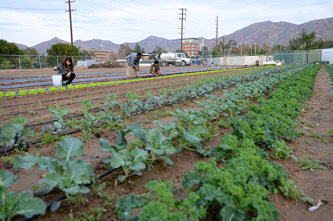 UC Riverside Global Food Security Week will take place May 9-15.