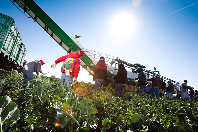 agricultural field workers
